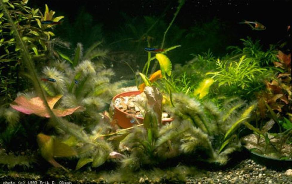 The War on Algae - Miyabi Aqua Design