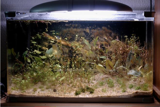 Image Gallery Diatoms Aquarium