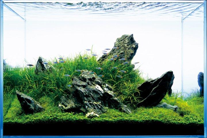 The Art of Nature Aquariums - Miyabi Aqua Design